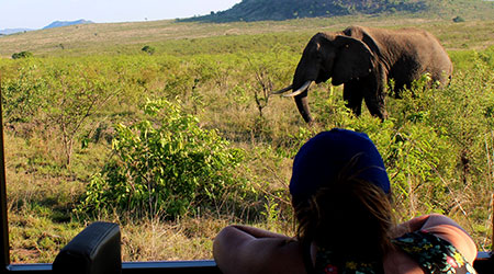 outlook-safari-packages elephants with guests