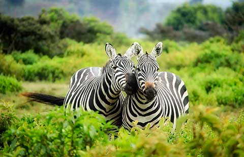 special-offer-kruger-park-classic-safari