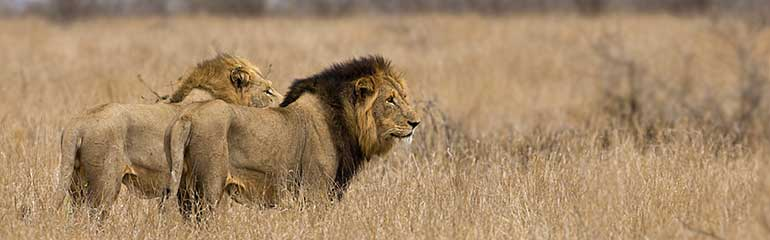 outlook-safari-tours-south-african-explorer